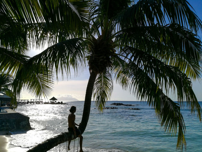 Sea Climbing Beach Water Nature Tropical Climate Horizon Over Water Tranquility Palm Tree Beauty In Nature Scenics Tranquil Scene Outdoors Silhouette Sky Travel Destinations Berjaya Beach Seychelles Aesthetic Tourism Vacations Adventure Sand Day Sunlight Tropical Paradise