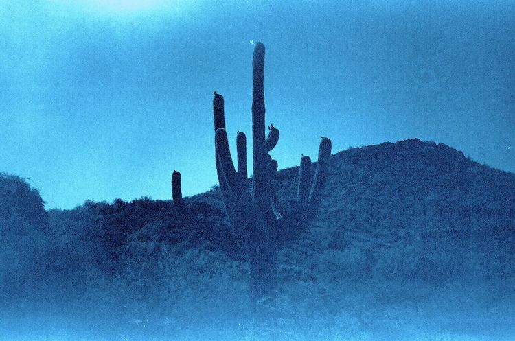 lonely cactus . my humble tribute to the involute cactus photograph by the master, ansel adams . . phoenix arizona may 2016 . expired 35mm kodak 200 film (no edit) Mountain Range Horizon Blue Tint 35mm Film Analogue Photography Beauty In Nature Blue Cactus Desert Expired Film Filmisnotdead Fine Art Photography Landscape Lens Flare Low Angle View No People Outdoors Phoenix, AZ Sky Sombre Sun Flare Tranquility Showcase June Arizona