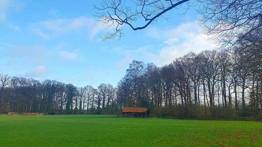 Traveling Country Life Countryside Scherpenzeel Grass Blue Sky Naked Trees Trees Hut Old Hut Landscape With Whitewall