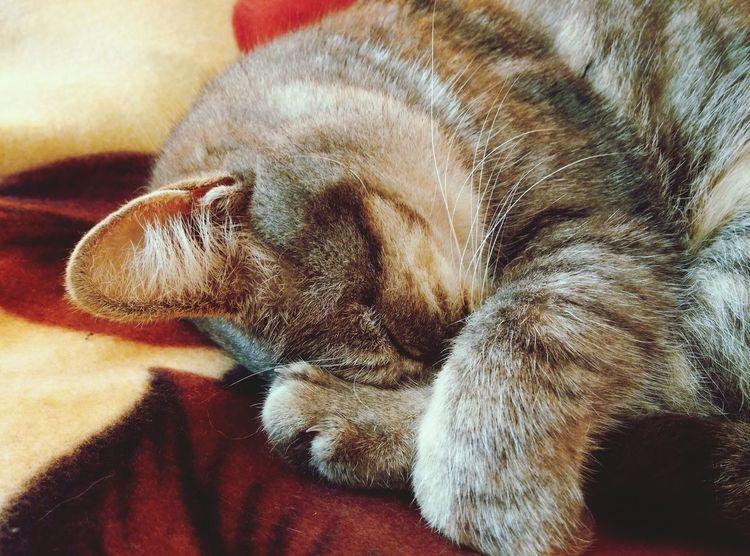 Cat Relaxing Sleeping Cute Pets Cute Lovely Nice