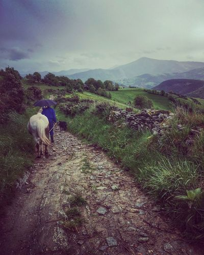 CaminodeSantiago Camino The Way The Way Of St James Man And A Horse Country Path Pilgrimage Camino De Santiago Camino Francés The Great Outdoors - 2017 EyeEm Awards Let's Go. Together. Your Ticket To Europe