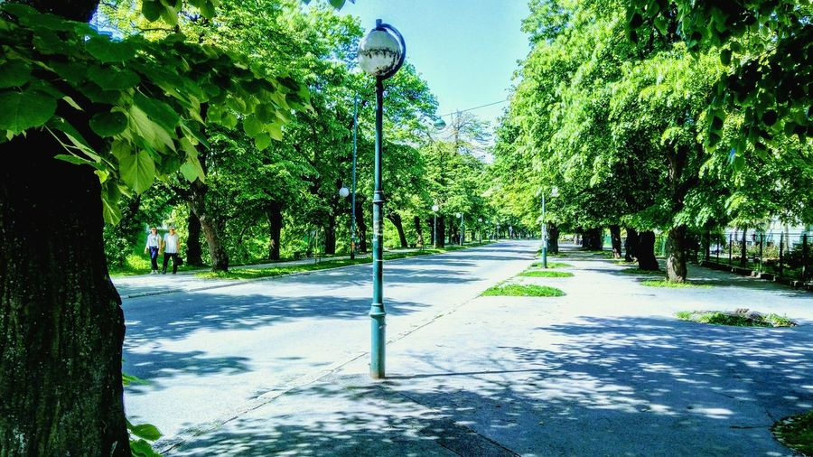 Tree Green Color No People Outdoors Beauty In Nature Nature Day Travel Photography Beautiful Photooftheday Destination Bosnia And Herzegovina Lovephotography  Sarajevo Sarajevobosnia Sarajevo Olympics Vilsonovosetaliste