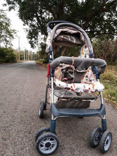 pug dog Pug Tree Childhood Land Vehicle Outdoor Play Equipment Baby Stroller Stationary Jinrikisha Vehicle Seesaw Roadways Bicycle Rack Baby Carriage Slide Jungle Gym
