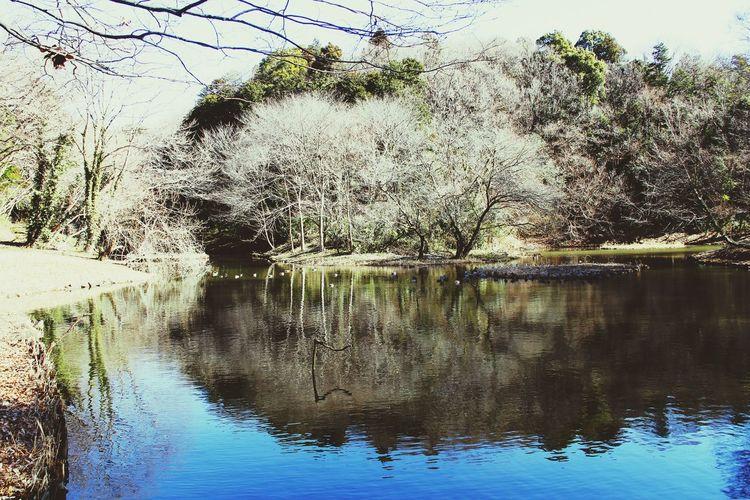 県立座間谷戸山公園水鳥の池 さんぽ 反射