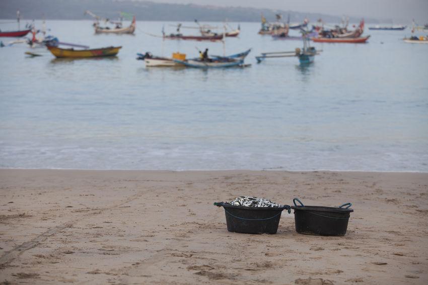 Fresh Fish on Bowl at Kedonganan Beach Bali Backgrounds Beach Beauty In Nature Fish Fish On Bow Fresh Fish INDONESIA Kedonganan Nature Nautical Vessel No People Sand Sea Sea Food Ship Water