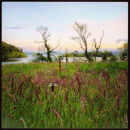 Summer dreams 🌾 Nature Irishcountryside WestOfIreland Fields Lake Tranquil Ireland Grasses Eveningwalk 30dayswild