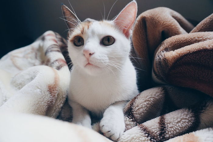 [Caption it as you feel] 🐈 Cat Cats Cat Lovers Cat Lover Beautiful Beauty Love Those Eyes In The Zone Zenful Relaxed Family Family Pet Cat Portrait Cute Feline Mini Tiger Portrait Domestic Pets Animal Themes Relaxation Yoga Zen Moment  Sleep All Day