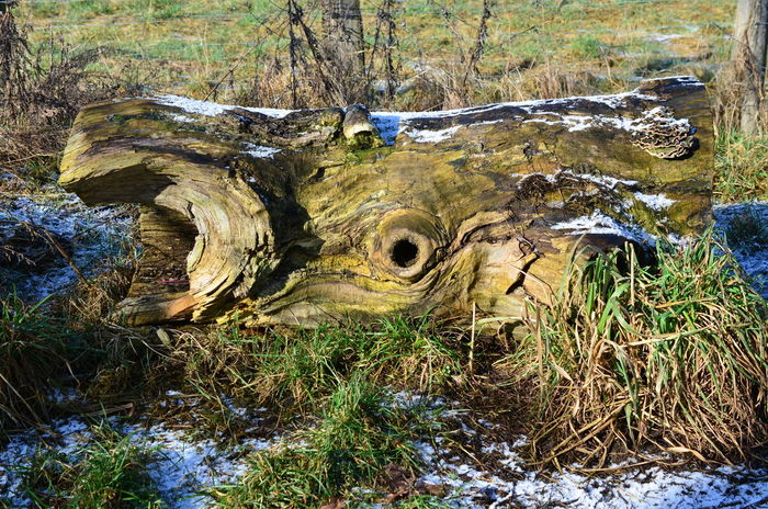 Face In The Tree Beauty In Nature Day Dead Tree Face In Nature Field Forest Grass Nature No People Outdoors Tranquility Tree Tree Stump Tree Trunk Water