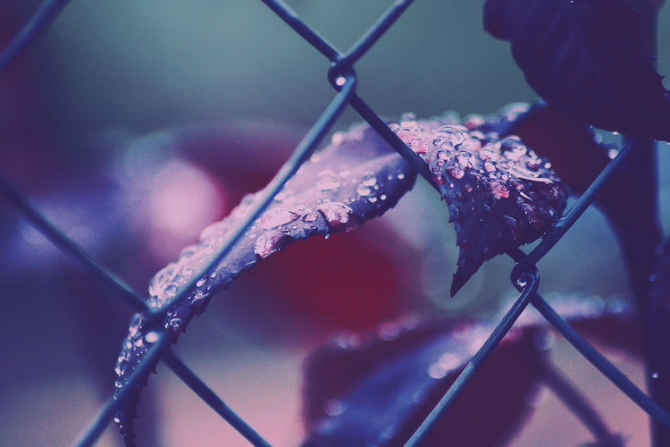 Walking with the rain Water Close-up Chainlink Fence Wire Mesh Grid Hexagon Honeycomb Link Padlock Flower Head Petal Pollen