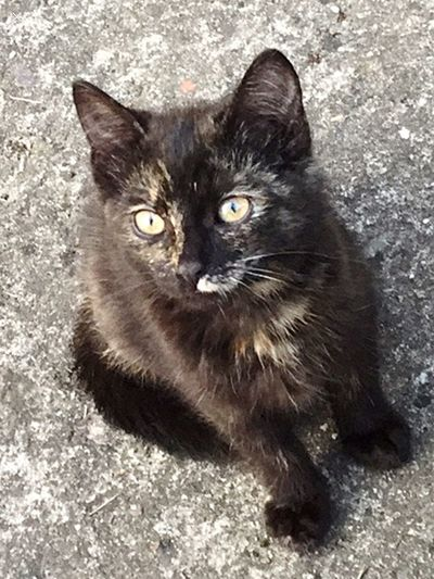 Cat Domestic Cat Domestic Pets Feline Domestic Animals Mammal Vertebrate No People Portrait Whisker Animal Hair Relaxation Black Color One Animal Close-up Animal Eye Hair