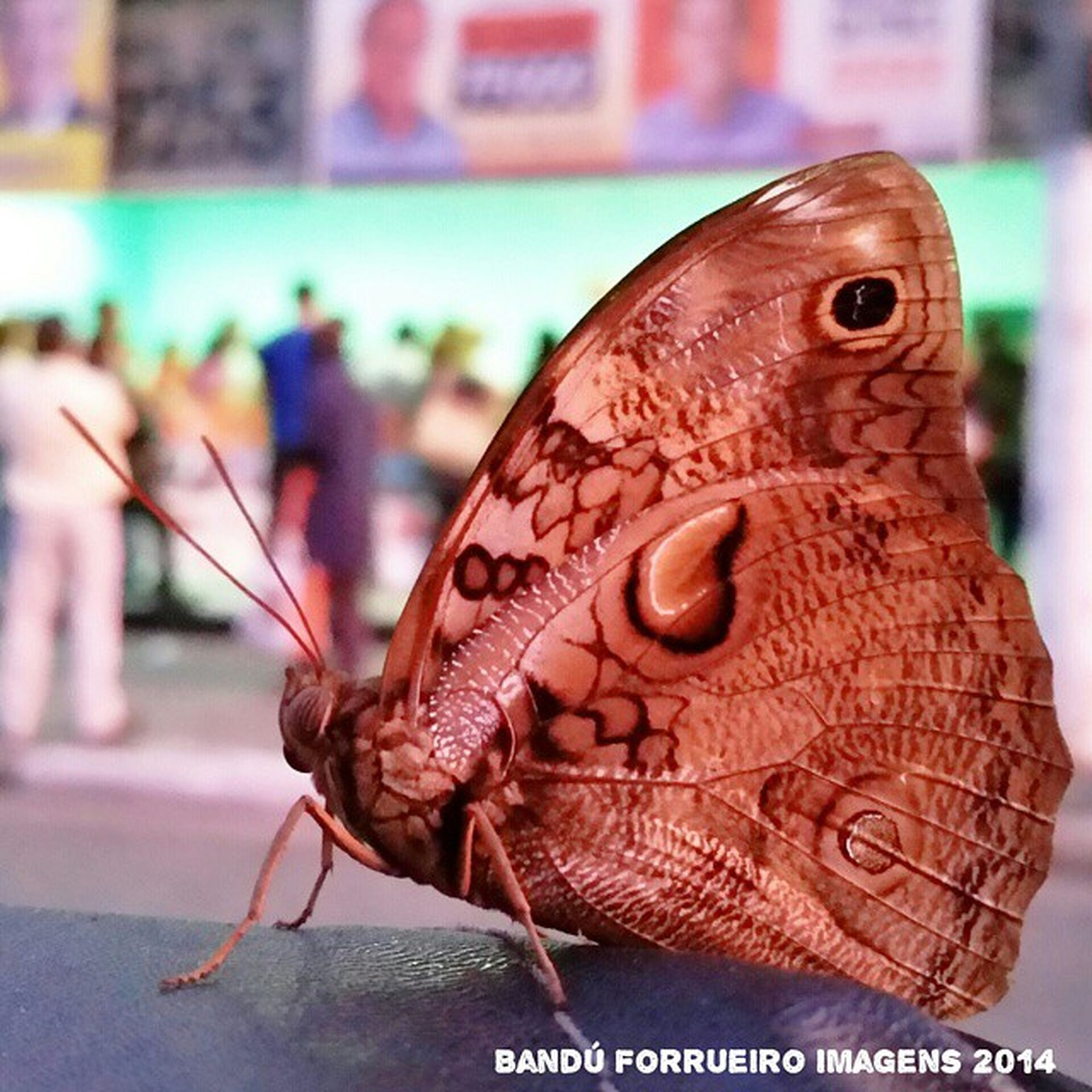 animal themes, animals in the wild, focus on foreground, one animal, wildlife, close-up, bird, outdoors, animal representation, day, text, brown, butterfly - insect, animal head, butterfly, side view, perching, nature, no people, animal wing