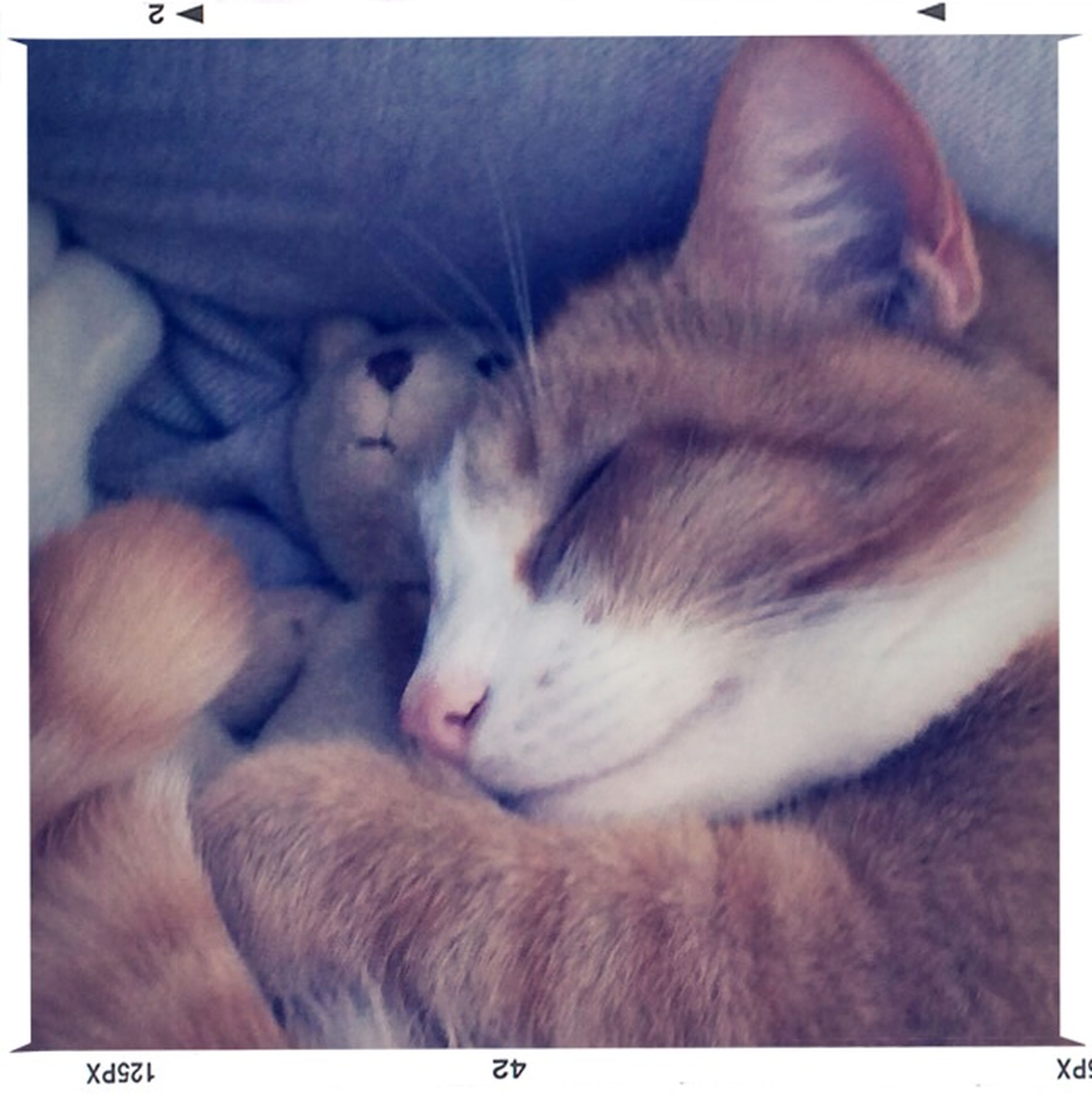 animal themes, domestic animals, pets, mammal, indoors, one animal, sleeping, transfer print, relaxation, domestic cat, resting, auto post production filter, cat, lying down, feline, two animals, eyes closed, vertebrate, close-up, zoology