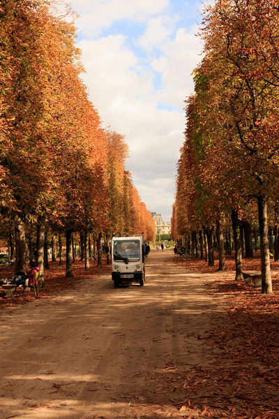 If Trees Could Speak Iftreescouldspeak Autumn Autumn Colors Fall Colors France Paris Paris ❤ Paris, France  Trees Autumn Car Change Day Fall Land Vehicle Leaves Mode Of Transport Nature No People Orange Color Outdoors Parisian Sky Transportation Tree