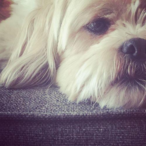 Pets Dog Close-up Portrait