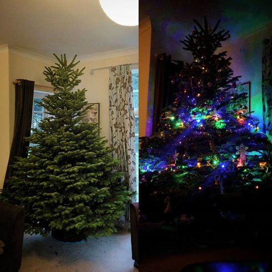 And this is the Behemoth we got yesterday from Digby Farm in N Luffenham. Poifick. Giant Christmas Tree Lights Festive Realtree