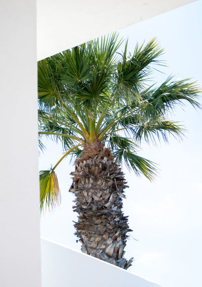 Single palm tree near white painted vacation homes Mediterranean  Travel Photography Traveling Nature Palm Tree Plant Tropical Climate