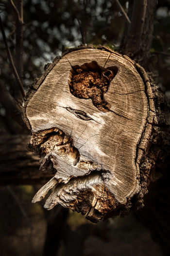 Nature No People Tree Stump Wood Abstract Beyond The Tangible Face Shape Textured  Sculpture Sculputed Close-up
