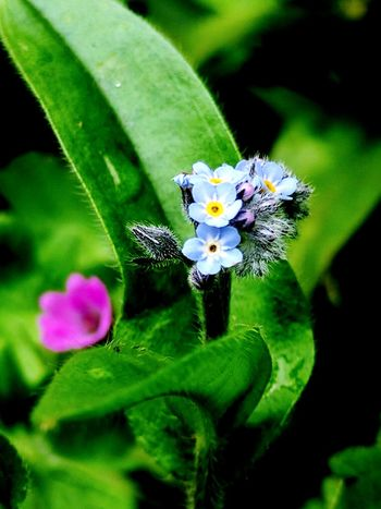 Tiny flowers Flower Green Color Fragility Close-up Plant Freshness No People Beauty In Nature Flower Head Pink Flower 🌸 Love Of Flowers Outdoors Growth Plant