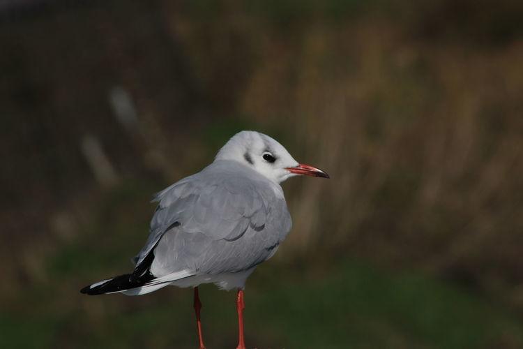 Bird Animal Themes Animal Japan Pretty Outdoors Seagull One Animal