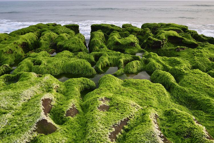 High angle view of moss on beach