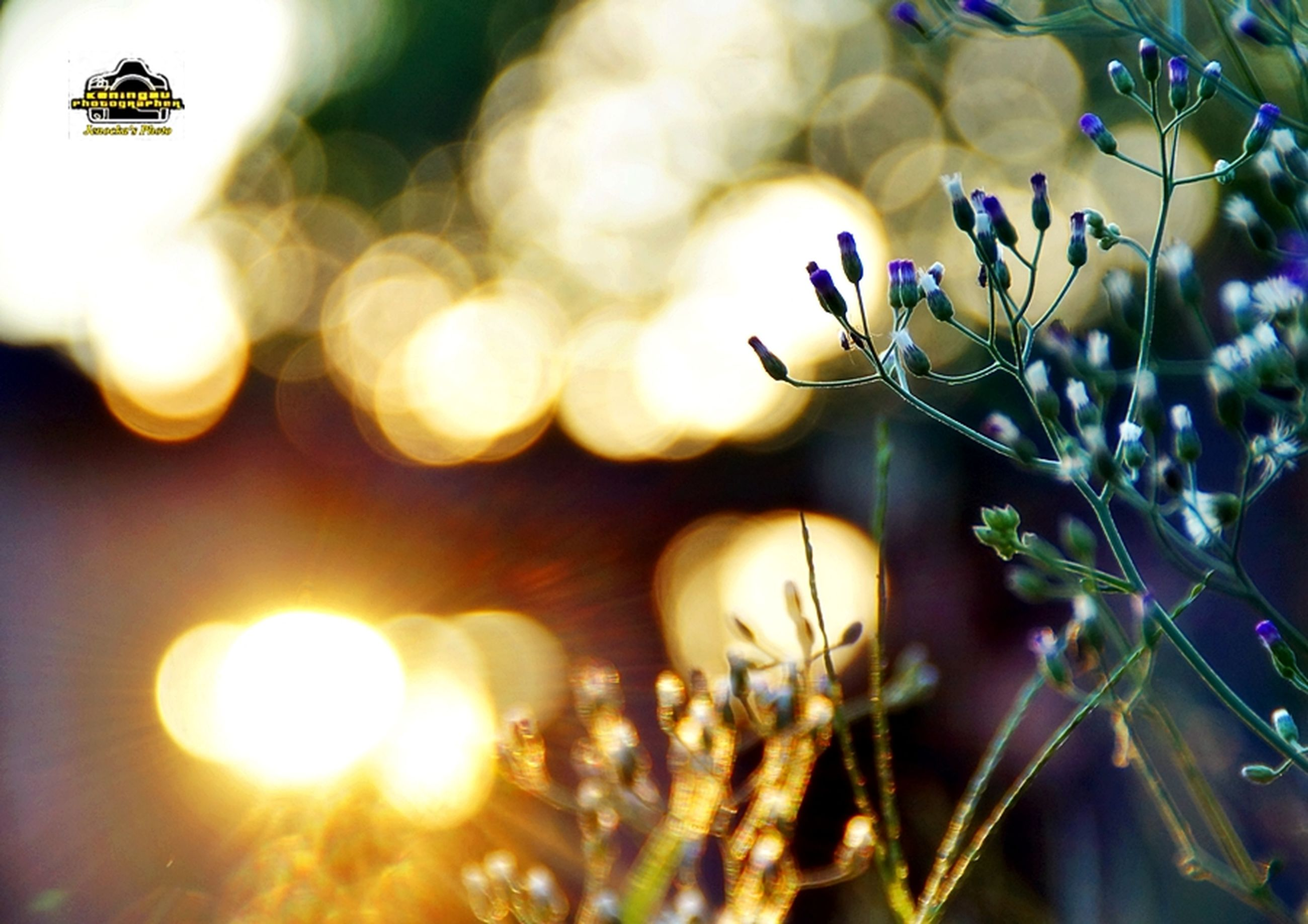 focus on foreground, close-up, growth, selective focus, branch, plant, leaf, twig, lens flare, nature, hanging, low angle view, tree, sunlight, outdoors, fragility, stem, no people, sun, beauty in nature