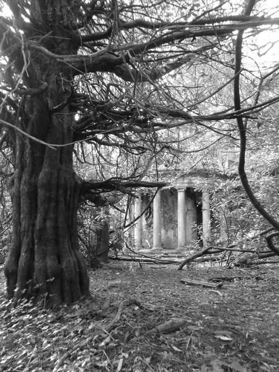 Taking Photos Hanging Out Check This Out Abandoned Places Abandoned Buildings Exploring Black And White Photography Forgotten Places  Overgrown And Beautiful Urban Decay Exploring New Ground EyeEm Gallery Amature Photography Outdoor Photography Eyem Best Shots Wildlife & Nature Outdoors Trees Nature Photography North Wales The Great Outdoors - 2016 EyeEm Awards Monochrome Photography Baron Hill Beaumaris