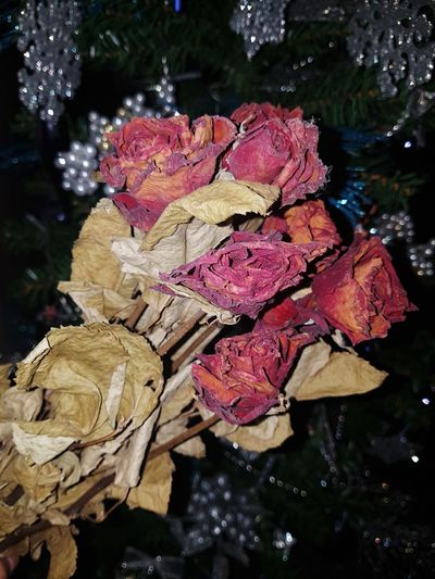 roses for you, my love. Eyemphilippines Withered  Withered Beauty Puremotions Rose - Flower Nature Close-up