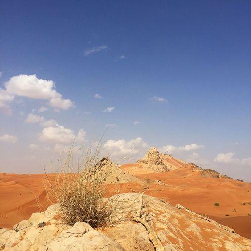 Adventures. Fossil Rock Desert UAE Sand