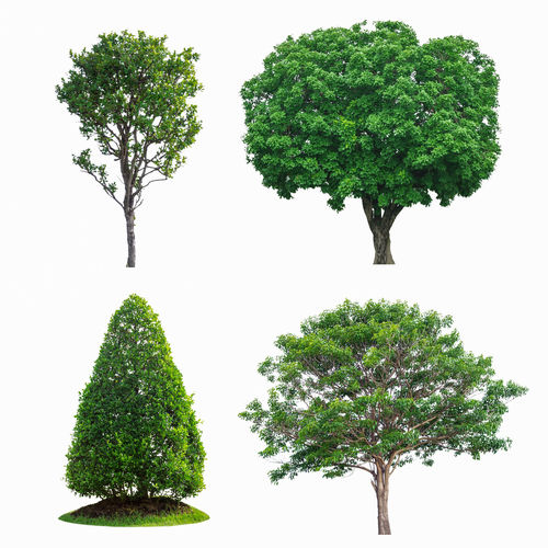 Green tree collection isolated on white background Tree Isolated Collection White Background Green Summer Nature Branch Environment Forest Life Plant Tropical Natural Growth Garden Foliage Large Spring Individual Botany Set Leafy Object Ecology Season  Leaf Trunk Oak