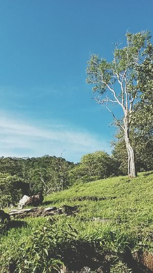 Nature On Your Doorstep Costa Rica ACOSTA