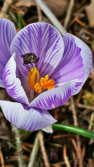 Awavercakphotography Flowers Fly Hungry Pig Messy Pollen Insects  Bugs Abugslife