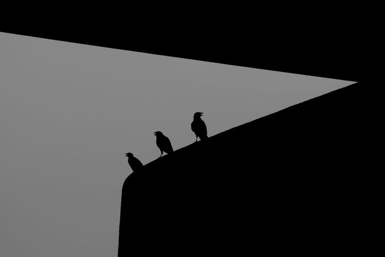 Low angle view of silhouette birds perching on roof