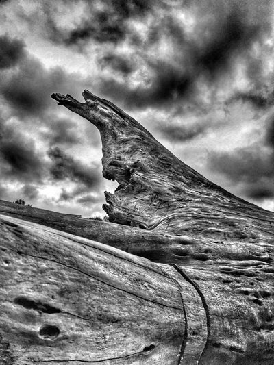 Abstractions In BlackandWhite Landscape Sky Cloud - Sky Outdoors Nature Beauty In Nature Backgrounds Weathered View Perspective Scenic Natural Condition (null)Shapes In Nature  Scenics Textured  Views Black And White Abstractions Abstract Nature Driftwood Power In Nature Layers And Textures