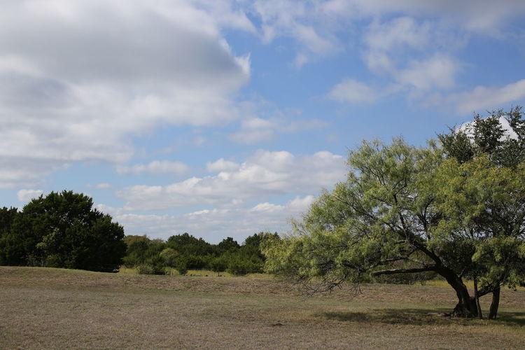 Trees on landscape against sky