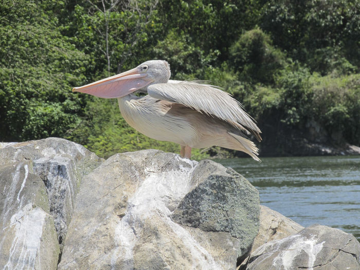 High angle view of gray heron on rock by lake