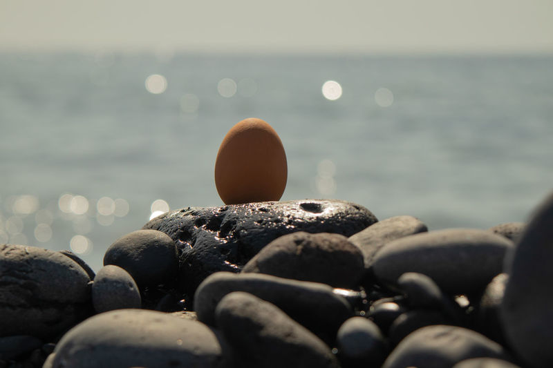Close-up of stones and egg on beach