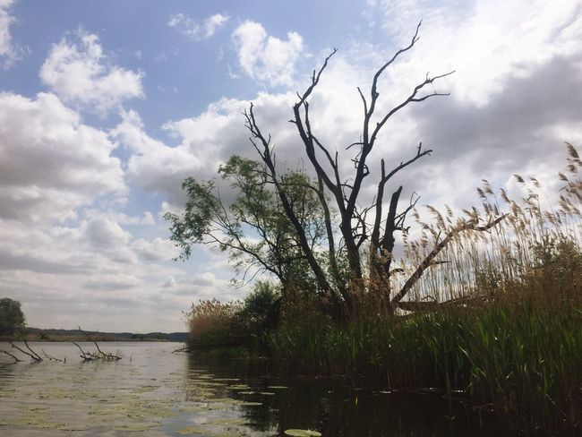 Nature Landscape Water River Tree Oder Gartz