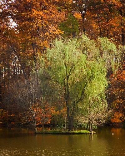 IPhoneography Enjoying Life Outdoors IPhone Autumn Fall Colors