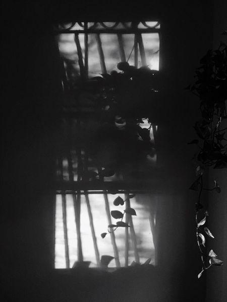 Shade Shaddow Window Plant Shadow Bars Plant Light Indoors  Illuminated