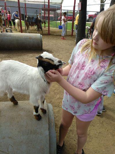 Girl Touching Kid Goat