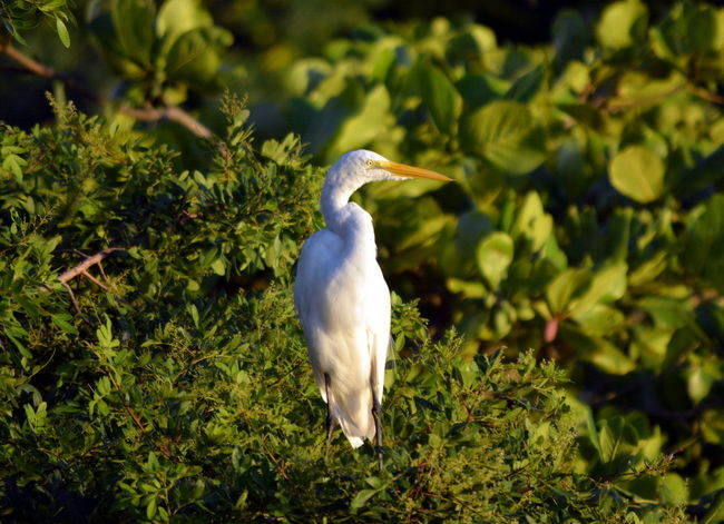 Beak Beauty In Nature Bird Egret Egretta Nature No People One Animal Plants Wildlife