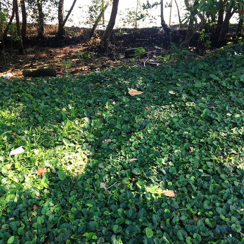 sobrepossição Composição E Cor Plant Photo Of The Day Ilha Do Governador