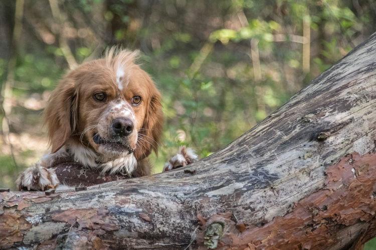 Portrait of a dog on wood