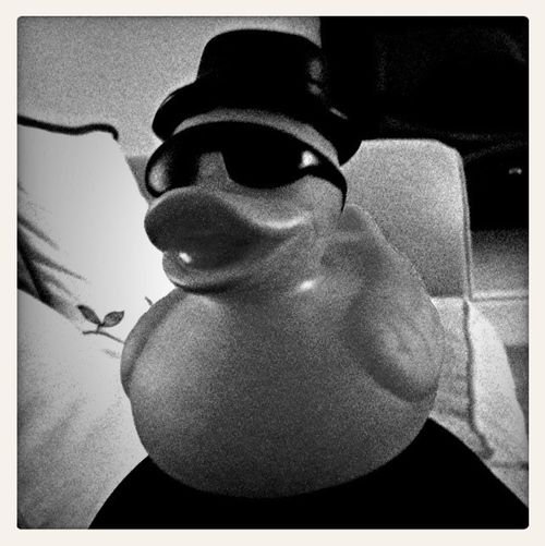 Duncan. Cruelly kidnapped and taken hostage. Have you seen this duck? Reward given for safe return (unless you are his kidnapper… in which case I will have revenge!)