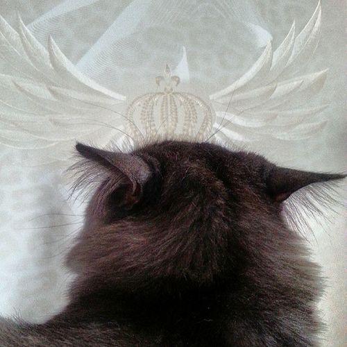 Я-король ! Я самый величественный кот в мире))). И да, я скромен))!