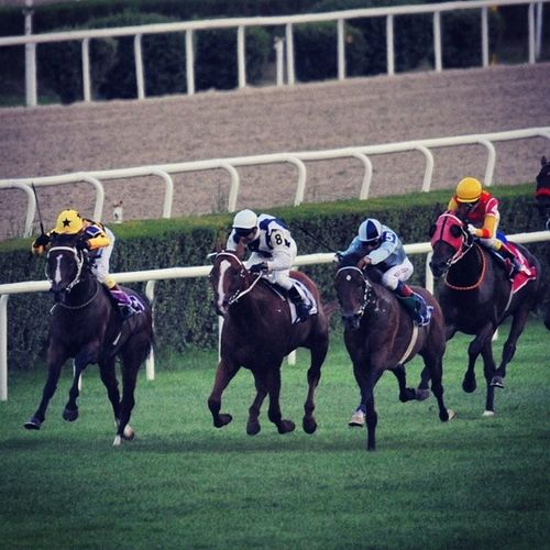 Horseriding Horserace Horse Sportphotography photojournalism photography likeall likeback liketeam color canon canon1d bestoftheday picoftheday istanbul turkishfollowers turkey