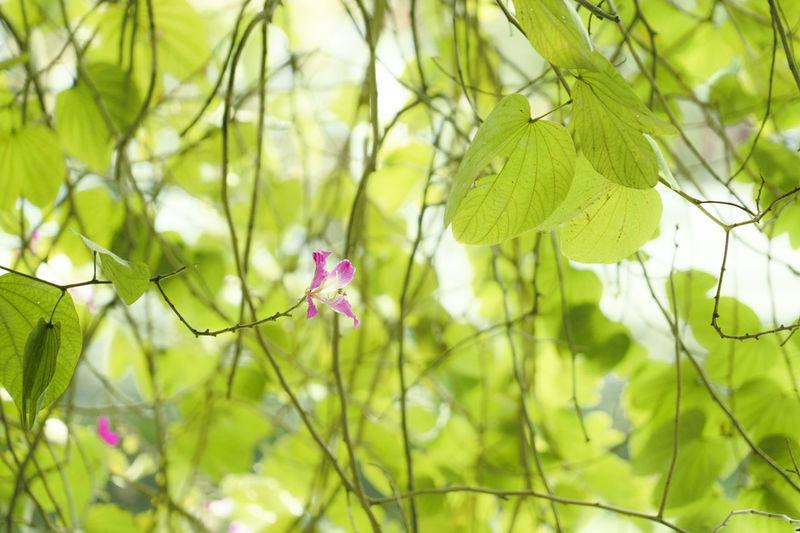 避暑杂荫下,静等午饭熟,一朵小红花,开在叶深处。 flower Plant Flowering Plant Flower Freshness Green Color Nature Branch Plant Part
