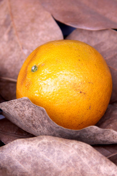 Orange fruit sweet and sour are on foliage in Thailand. Tree Wood Thailand Summer Happiness Orange Orange Tree Fruit Health Fruit Sour Sweet Fruit Autumn Foliage Relax Rurelexploration Healthcare Fruit Healthy Eating Food And Drink Citrus Fruit Freshness No People Food Close-up Yellow Whole Crumpled Paper Nature Indoors  Day