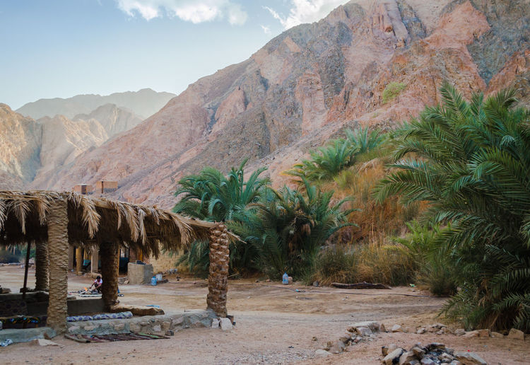 Scenic view of palm trees on mountain