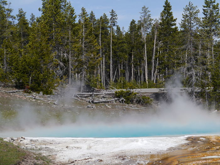 Beauty In Nature Day Flowing Water Fountain Paint Pot Area Green Color Growth Idyllic Nature No People Non-urban Scene Outdoors Remote Scenics Tranquil Scene Tranquility Water Yellowstone National Park
